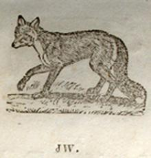 Tsula, Fox, from the Cherokee Primer 1845.  Blackfox is a different word, Inoli.